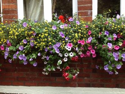 window basket by four seasons plantscaping